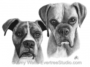 drawing-pet-dogs-boxers