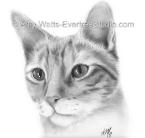 pet-portrait-drawing-tabby-cat