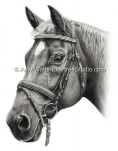 charcoal-portrait-drawing-quarter-horse