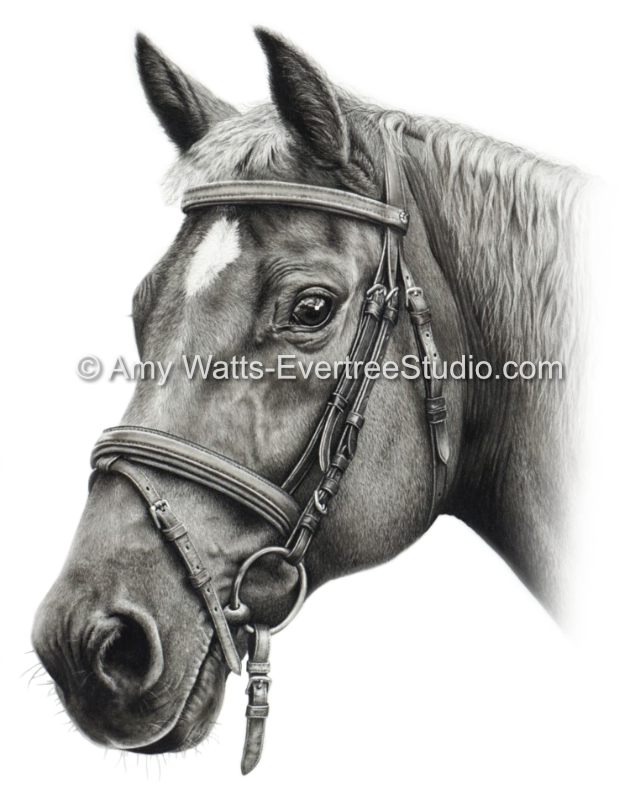 realistic-drawings-of-wildlife-and-horses-quarter-horse