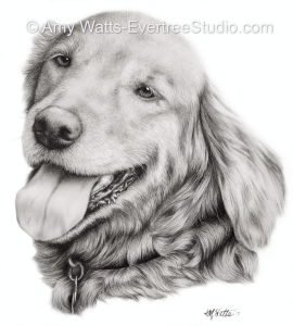 drawing-portrait-pet-dog-golden-retriever