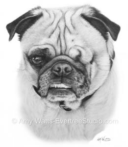 drawing-portrait-pet-dog-pug-hamilton