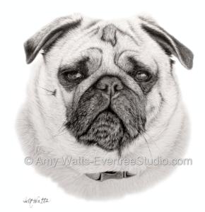 drawing-pet-portrait-dog-pug-mason