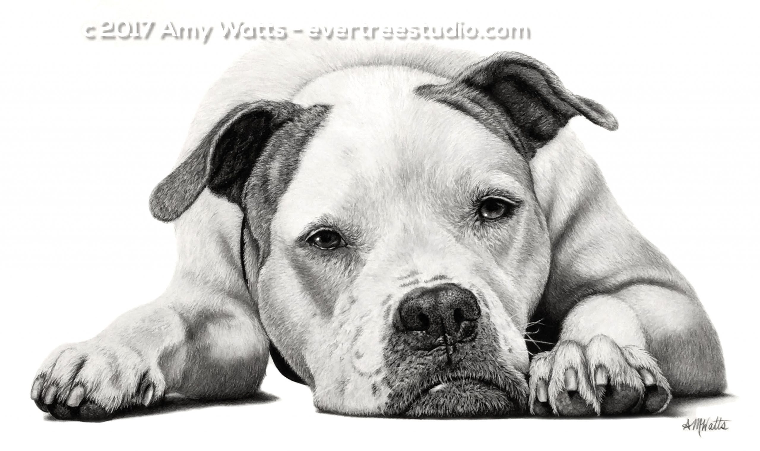 realistic-pet-drawings-from-photos-header