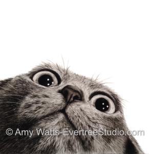 drawing-pet-portrait-cat-crazy
