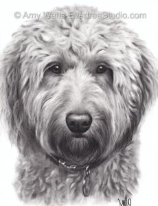 drawing-pet-dog-labradoodle