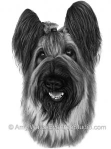 drawing-portrait-pet-dog-briard