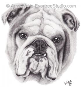drawing-pet-dog-bulldog