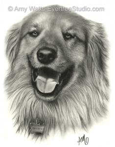 drawing-portrait-pet-dog-chow