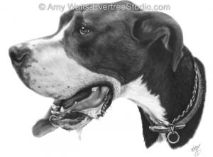 drawing-pet-dog-great-dane