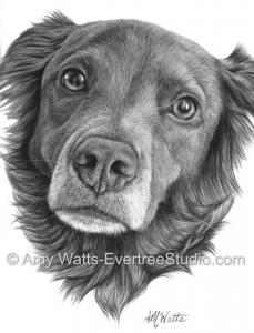 drawing-pet-dog-portrait