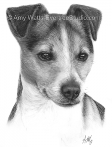 drawing-pet-dog-jack-russell-terrier