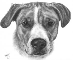 drawing-pet-dog-pit-mix