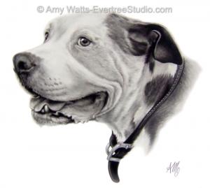 drawing-pet-dog-pitbull