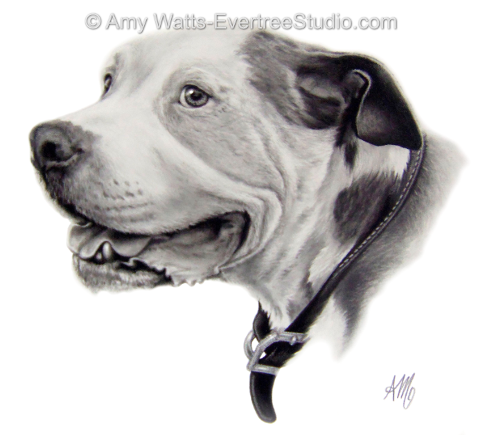 realistic-pet-drawings-from-photos-pitbull