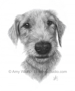 drawing-charcoal-portrait-dog-terrier