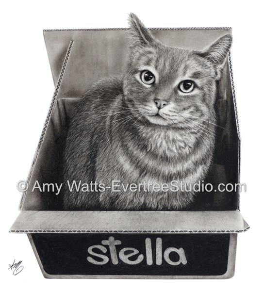 realistic-pet-drawings-from-photos-cat-box