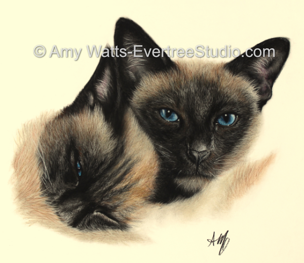 realistic-pet-drawings-from-photos-cats-siamese