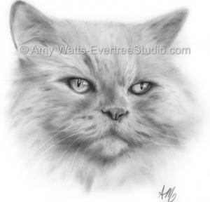 pet-portrait-drawing-persian-cat