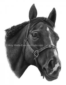 portrait-horse-charcoal-amy-watts