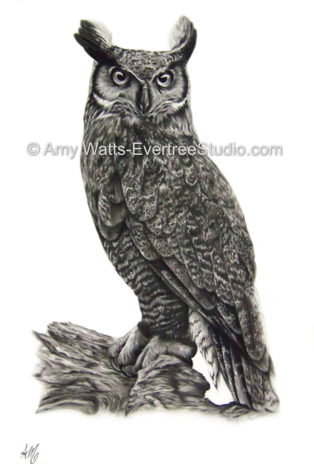 drawing-charcoal-great-horned-owl-amy-watts