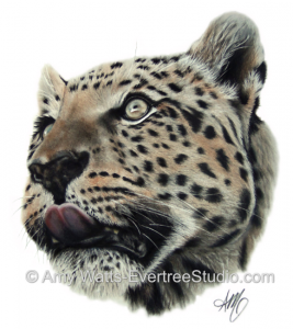 drawing-charcoal-pastel-leopard-amy-watts