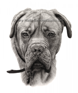 drawing-pet-dog-portrait-old-boxer