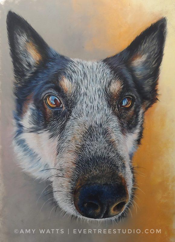 jax-blue-heeler-pastel-portrait