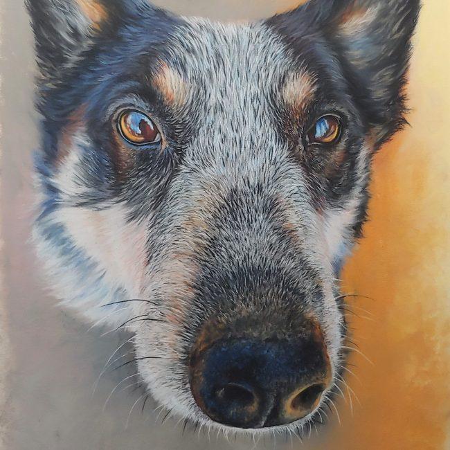 soft-pastel-portrait-painting-dog-blue-heeler